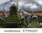 Balinese Long Tailed Monkey....