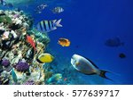Colorful Coral Reef Fishes Of...