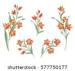 floral bouquet set. wild ... | Shutterstock .eps vector #577750177