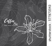 hand drawn sketch coffee tree.... | Shutterstock .eps vector #577873543