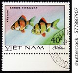 Small photo of MOSCOW, RUSSIA - JANUARY 7, 2017: A stamp printed in Vietnam, shows fishes Barbus Tetrazona, Ornamental Fish, circa 1980