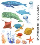 set of marine animals  the... | Shutterstock . vector #577905397