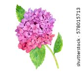 watercolor pink hydrangea with... | Shutterstock . vector #578015713