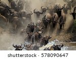Wildebeest Crossing The Mara...