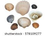 saltwater clams | Shutterstock . vector #578109277