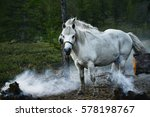 Yakut Horse   Hardy  But The...