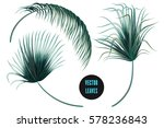 vector palm leaves  jungle leaf ... | Shutterstock .eps vector #578236843