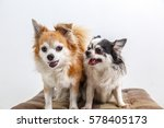 chihuahua dog on withe... | Shutterstock . vector #578405173