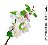 White Apple Flowers Branch...