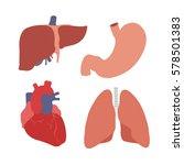 human organs. heart  liver ... | Shutterstock .eps vector #578501383