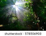 Sun Light In The Rain Forest