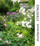 Small photo of Collection of different roses growing in an English country garden amongst Alchemilla mollis, lady's mantle