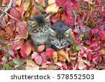Stock photo two kittens and autumn leaves 578552503