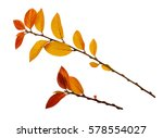 autumn twigs with yellow and... | Shutterstock . vector #578554027