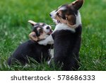 photo of welsh corgi dog family ... | Shutterstock . vector #578686333