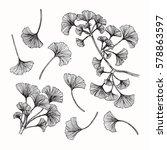 vector collection set of ginkgo ... | Shutterstock .eps vector #578863597