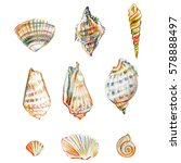 colored seashell isolated on... | Shutterstock . vector #578888497