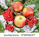 Apples And Viburnum In The Sno...