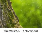 spider web | Shutterstock . vector #578992003