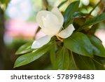 Amazing Nature Of White...