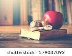 old vintage book on wooden... | Shutterstock . vector #579037093