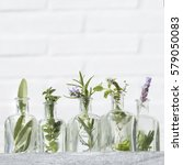 bottle of natural herbs... | Shutterstock . vector #579050083
