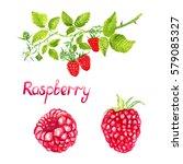 raspberries branch with flowers ... | Shutterstock . vector #579085327