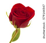 Stock photo red rose unopened isolated on white background 579144547