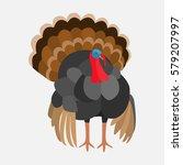 poultry turkey | Shutterstock .eps vector #579207997