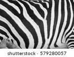 Zebra   Abstract Background