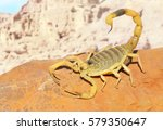 yellow scorpion on red sand... | Shutterstock . vector #579350647