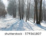 cold winter in the woods  | Shutterstock . vector #579361807