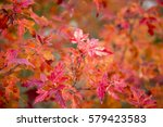 Red Fall Leaves Background