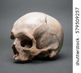 skull without a jaw | Shutterstock . vector #579509257