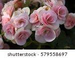 Nature Floral Background Pink...