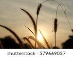 grass in sunset time. | Shutterstock . vector #579669037