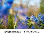 Luminous Blue Scilla In...