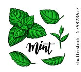 mint drawing set. isolated... | Shutterstock . vector #579823657