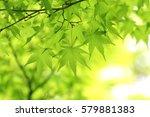 leaves of fresh green. leaves... | Shutterstock . vector #579881383