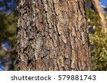 Bark Of Red Pine