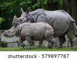 Newborn Indian Rhinoceros ...