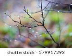 new leaf shoots and raindrops...   Shutterstock . vector #579917293