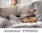 little puppy dog laying over... | Shutterstock . vector #579926923