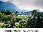 kirstenbosch botanical garden... | Shutterstock . vector #579971083