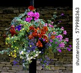 Hanging Basket Container Mixed...