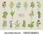 set of herbs. collection hand... | Shutterstock .eps vector #580038883