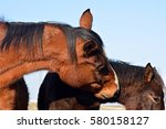 Two Lovely Horses.
