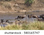 Wildebeests Jumping In Water T...