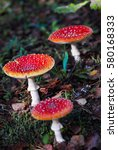 Small photo of Red amanita mushroom in autumn forest