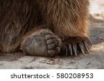 Eurasian Brown Bear  Ursus...